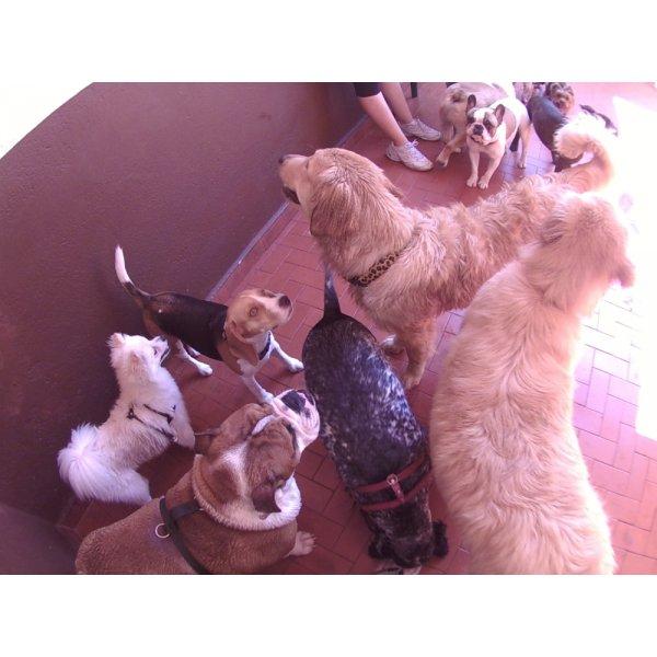 Preço de Serviços de Daycare Canino na Boa Vista - Daycare para Cães