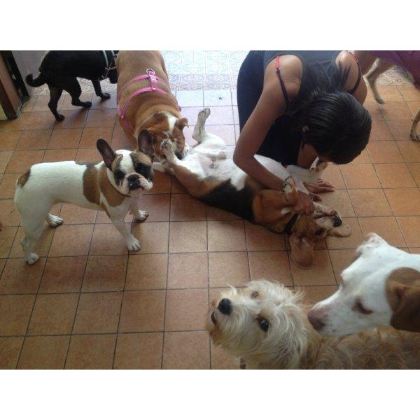 Preço de uma Hospedagem Canina na Vila Gilda - Hotel para Cães em São Caetano