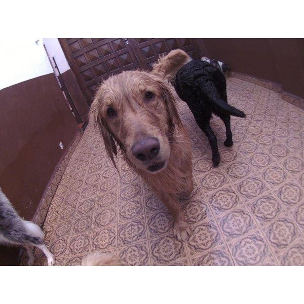 Preço do Day Care Canino no Jardim Bom Pastor - Day Care Dogs