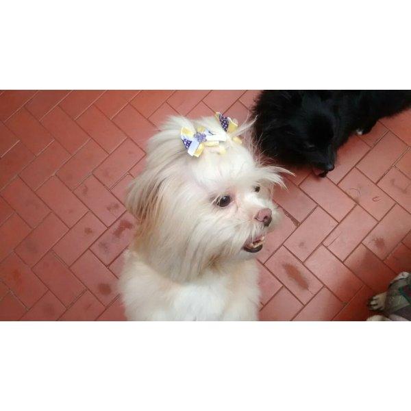 Preço Dogsitter na Vila Assunção - Serviço de Babá de Cachorros Filhotes