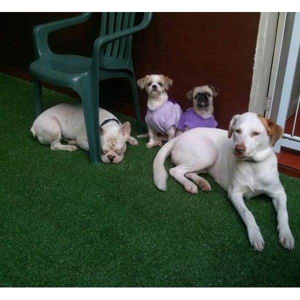 Preço Hotel para Cães na Vila Sá - Hotel para Cães no Bairro Campestre