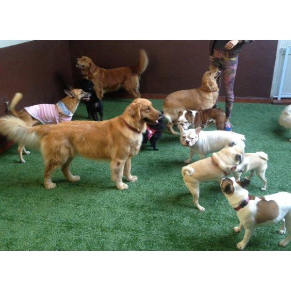Preço Hotel para Cães na Vila São Rafael - Hotelzinho para Cachorro