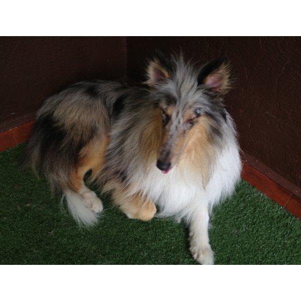 Preço Passeador de Cachorro na Vila Helena - Dog Walker no Bairro Olímpico