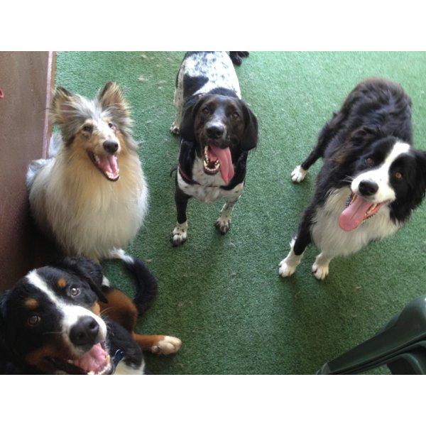 Preço Passeadores de Cachorro na Vila Babilônia - Passeador de Cães SP