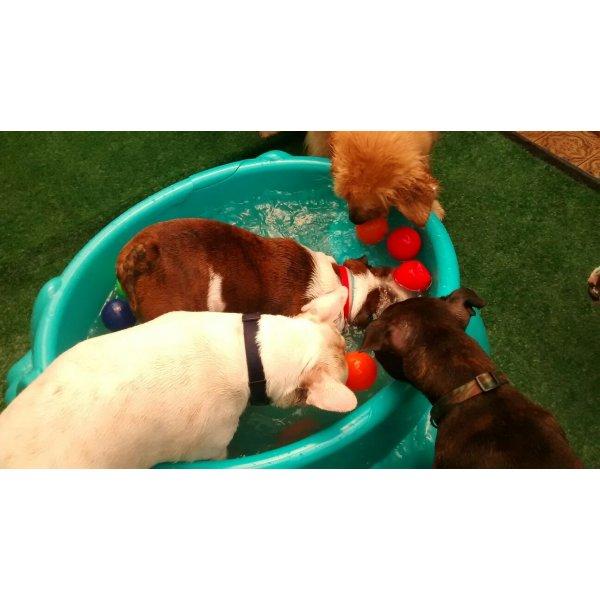 Preço Serviço de Babá de Cachorros em Taboão - Dog Sitter no Bairro Jardim