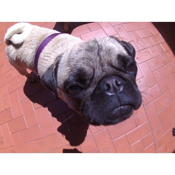 Preço Serviço de Day Care Canino na Vila Bastos - Serviço de Daycare Canino