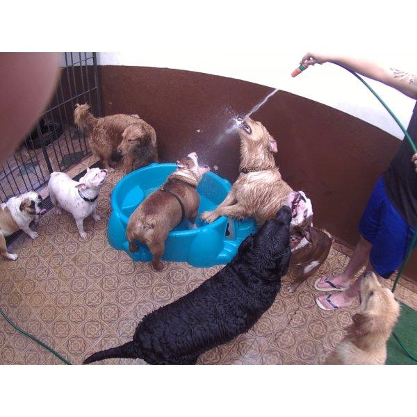 Preço Serviço de Daycare Canino na Vila Ipê - Daycare Dogs