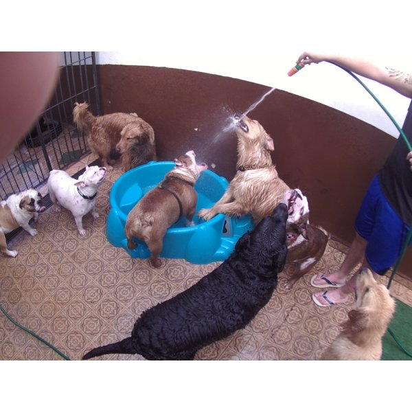 Preço Serviço de Daycare Canino no Jardim Bela Vista - Daycare para Cães