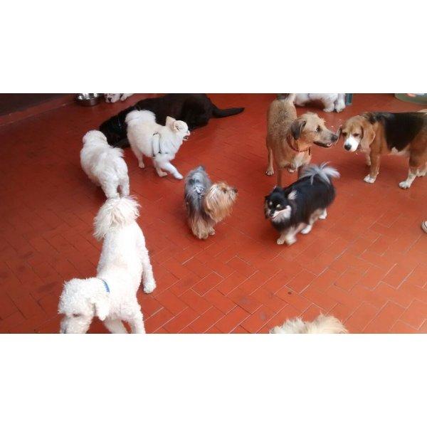 Preço Serviço Dog Sitter na Vila Imperial - Babá para Cães