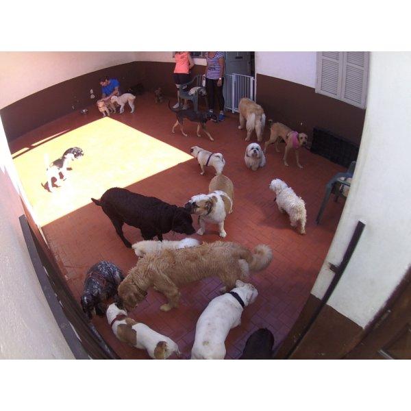Preço Serviços de Daycare Canino na Chácara Paineiras - Serviço de Daycare para Cachorros