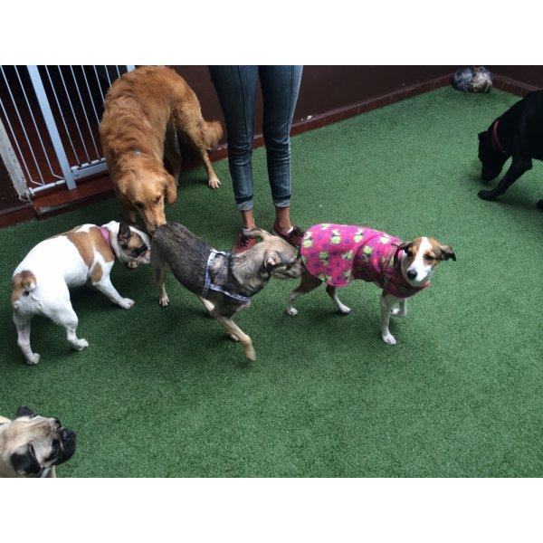 Preços Adestradores de Cães em Mercado - Empresa de Adestradores de Cachorros