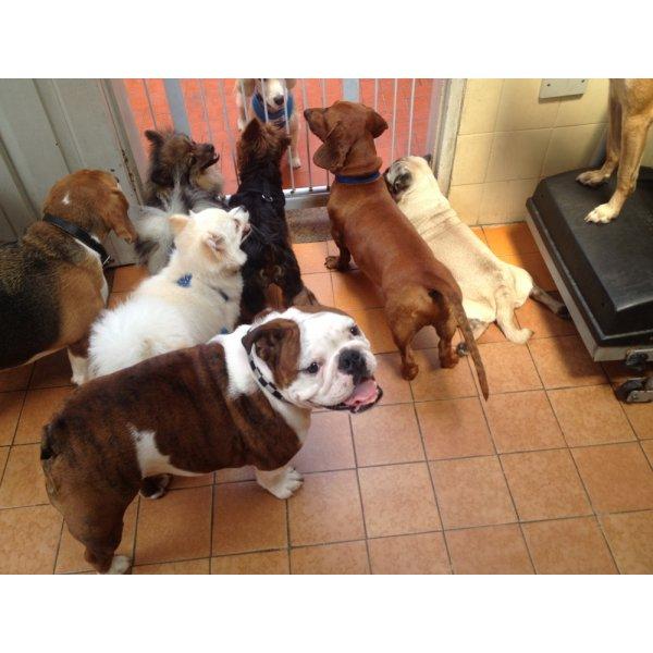 Preços Adestramentos de Cachorro na Vila Sá - Adestramento de Filhotes