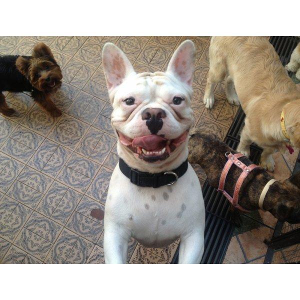 Preços da Hospedagem Canina no Centro - Hotel para Cães no Bairro Olímpico