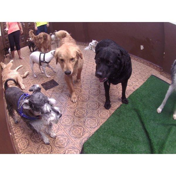 Preços Day Care Canino no Rudge Ramos - Day Care para Cães