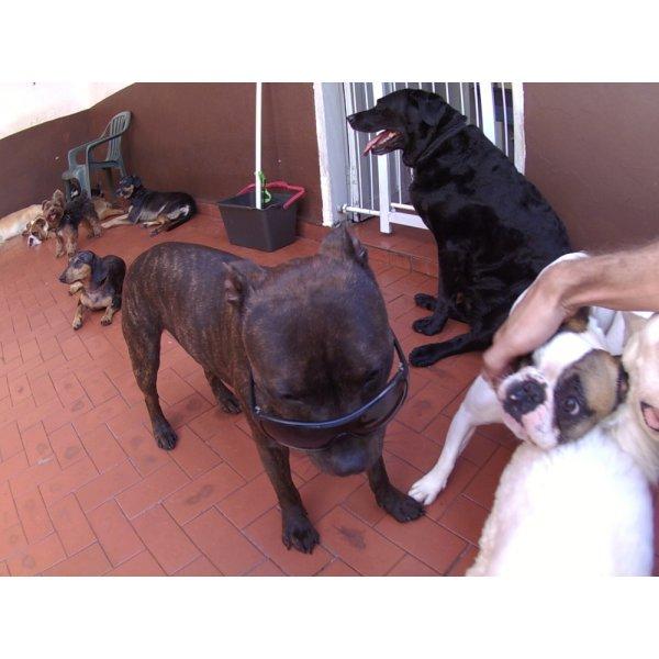 Preços Daycare Pet no Parque Novo Mundo - Daycare para Cães