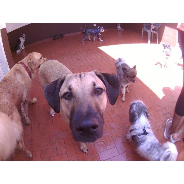 Preços de Day Care Canino no Jardim Itapoan - Day Care para Cães