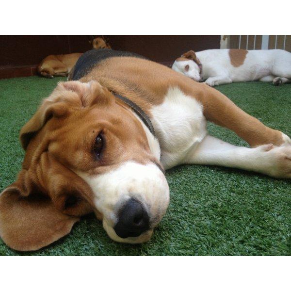 Preços de Hospedagem Canina no Parque Capuava - Hotel para Cães em São Caetano