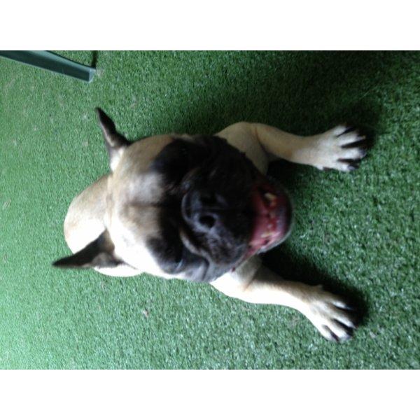 Preços de Passeador de Cachorro na Vila Francisco Mattarazzo - Passeadores de Cães