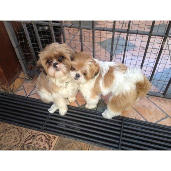Preços de um Hotel Dog na Liberdade - Hotelzinho de Cães