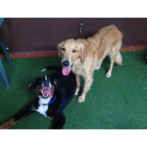 Preços do Passeador de Cachorro no Jardim Ampliação - Passeadores de Cães