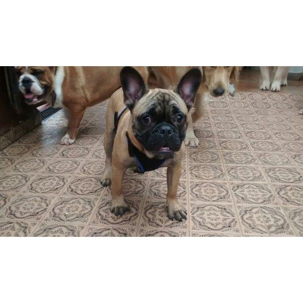 Preços Dogsitter na Vila Eldízia - Serviço de Babá de Cachorros Filhotes