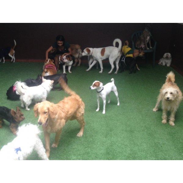Preços Hotel para Cães na Vila Internacional - Hotel para Cães no Bairro Campestre