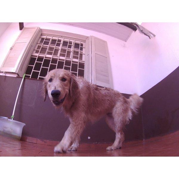 Preços Serviço de Day Care Canino no Jardins - Serviço de Daycare Canino