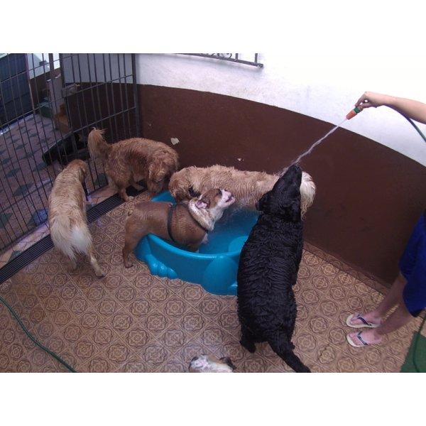 Preços Serviço de Daycare Canino na Vila Lucinda - Day Care para Cães