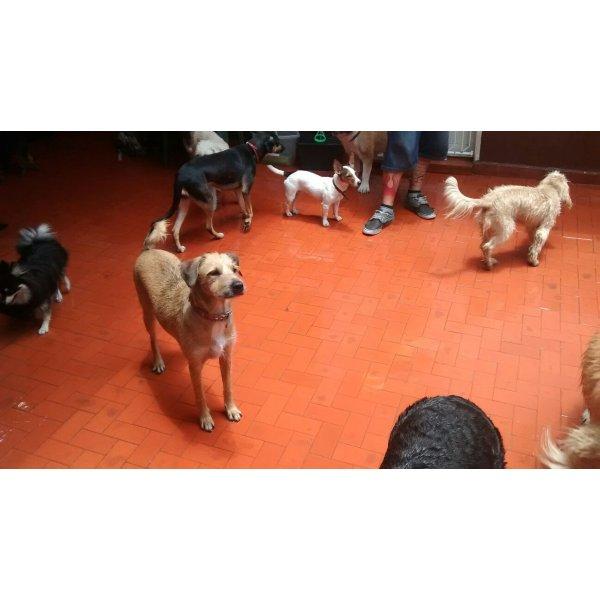 Preços Serviço Dog Sitter na Conceição - Babá para Cães