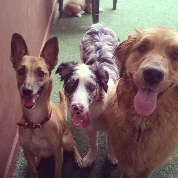 Qanto Custa um Dog Walker na Vila Alzira - Preço de Dog Walker