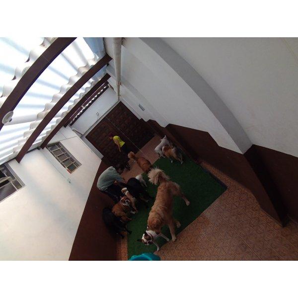 Quanto Custa em Média Daycare Pet na Vila Moinho Velho - Dog Care em Santa Maria