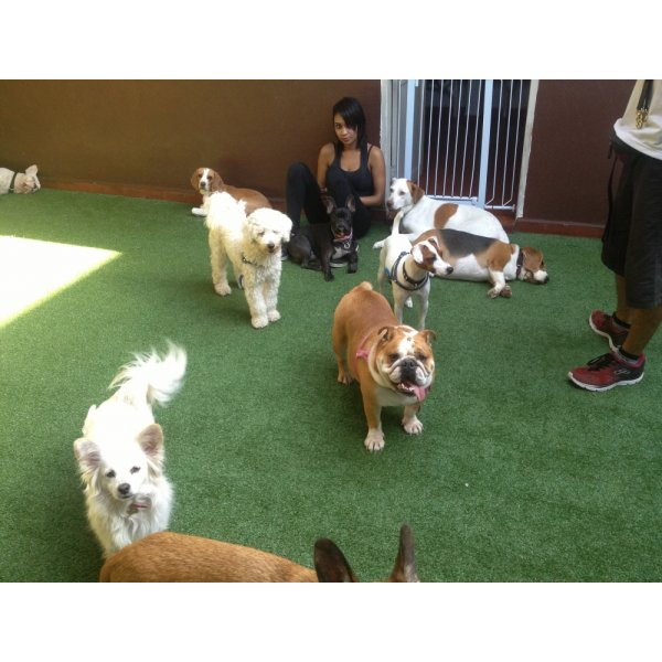Quanto Custa Hotéis para Cães na Vila Miranda - Hotel para Cães em Santo André