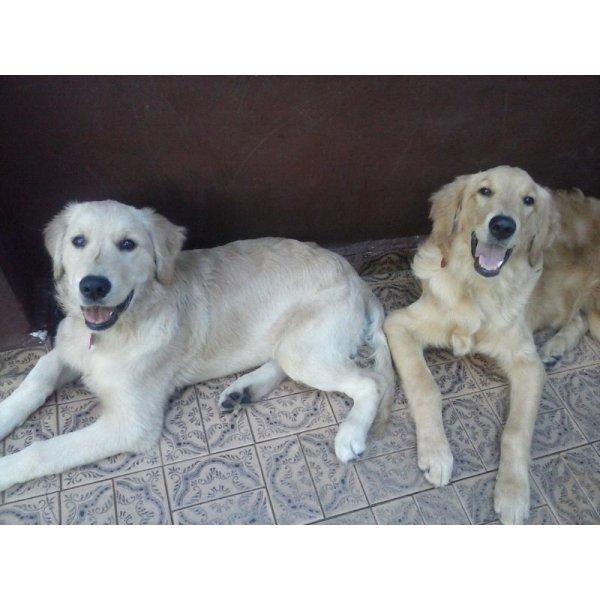 Quanto Custa Hotel para Cachorros no Jardim Edith - Hotel para Cães no Bairro Campestre