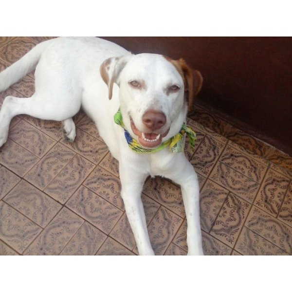 Quanto Custa Hotel para Cão na Vila Elisio - Hotel para Cães no Bairro Campestre