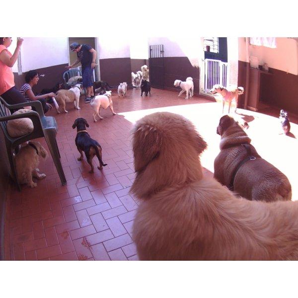 Quanto Custa o Serviços de Daycare Canino no Jardim Paulistano - Serviço de Daycare para Cachorros