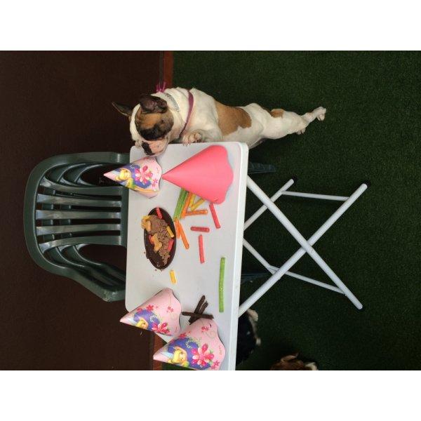 Serviço de Adestrador de Cachorro Preço no Jardim Pilar - Adestrador de Cães em São Bernardo