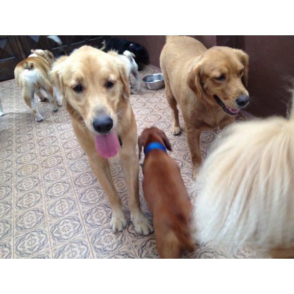Serviço de Adestrador de Cães Preço no Jardim Santo Alberto - Adestramento para Cães ABC