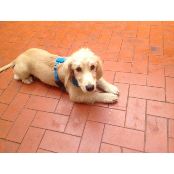 Serviço de Adestramentos de Cachorro Filhote Valor no Jardim Paulistano - Adestramento para Cães ABC