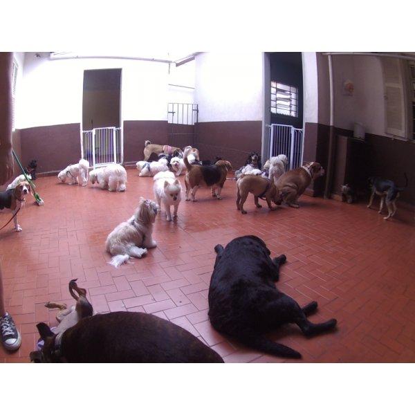 Serviço de Babá de Cachorros na Santa Maria - Dog Sitter no Bairro Jardim