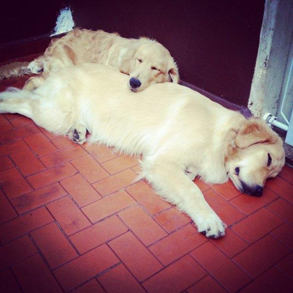 Serviço de Babá de Cachorros Onde Encontrar no Pinheirinho - Dog Sitter em São Bernardo