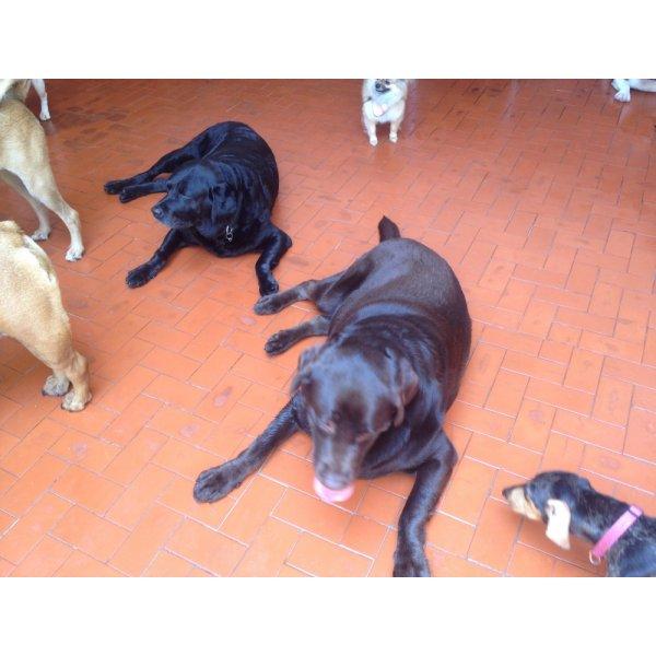 Serviço de Babá de Cachorros Onde Tem no Jardim Europa - Dog Sitter em São Bernardo