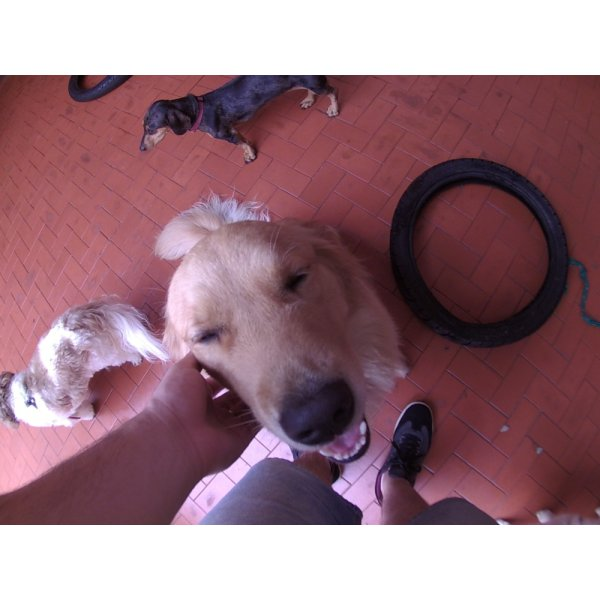 Serviço de Babá de Cachorros Preço na Vila Monumento - Dog Sitter em São Bernardo