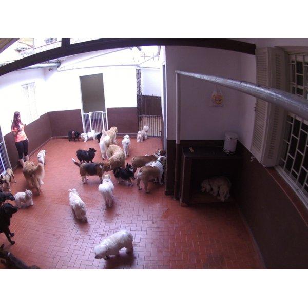 Serviço de Babá de Cachorros Preços na Chácara Monte Alegre - Babá para Cães