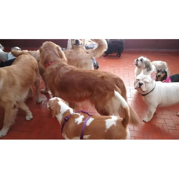 Serviço de Babá de Cachorros Valor na Chácara Maranhão - Dog Sitter no Bairro Jardim