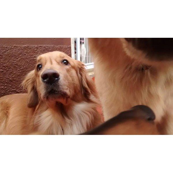 Serviço de Babá de Cachorros Valores no Jardim Hípico - Serviço de Babá de Cachorros Filhotes