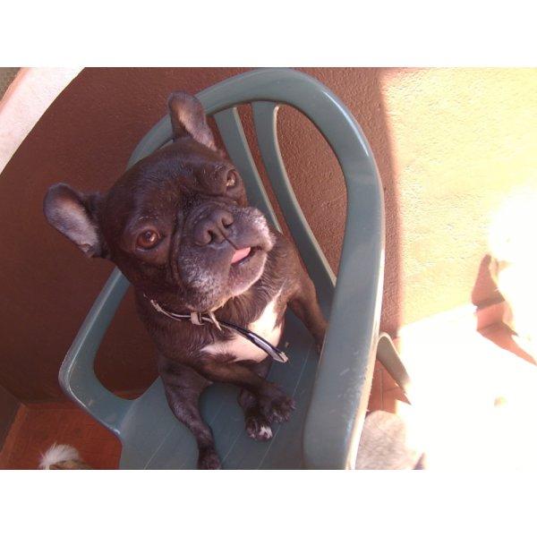 Serviço de Day Care Canino Preços na Várzea da Barra Funda - Serviço de Daycare Canino