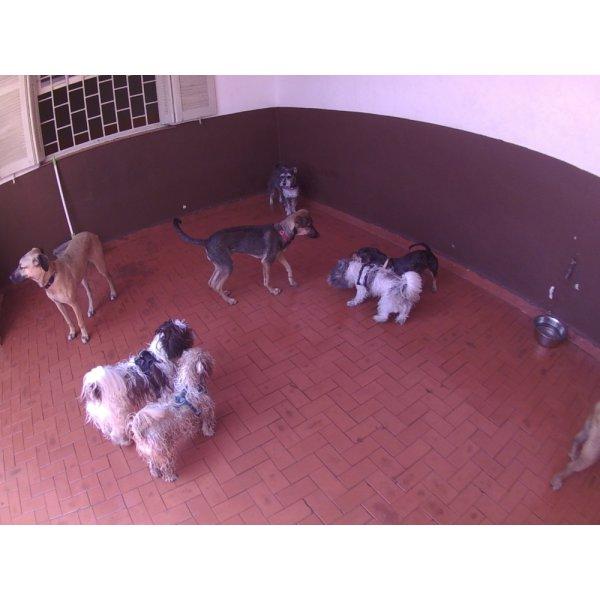 Serviço de Day Care Canino Quanto Custa no Jardim São Martinho - Day Care Canino