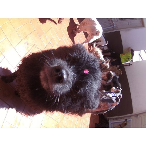 Serviço de Day Care Canino Valores no Bairro Silveira - Serviço de Daycare Canino