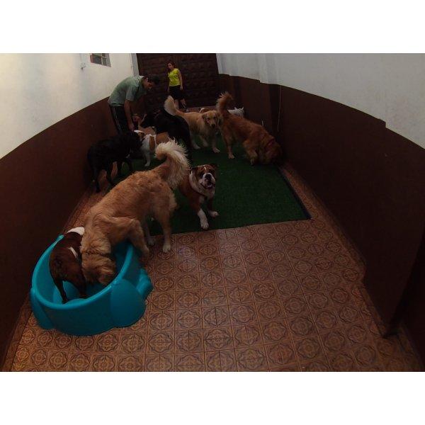 Serviço de Daycare Canino na Oswaldo Cruz - Daycare para Cães