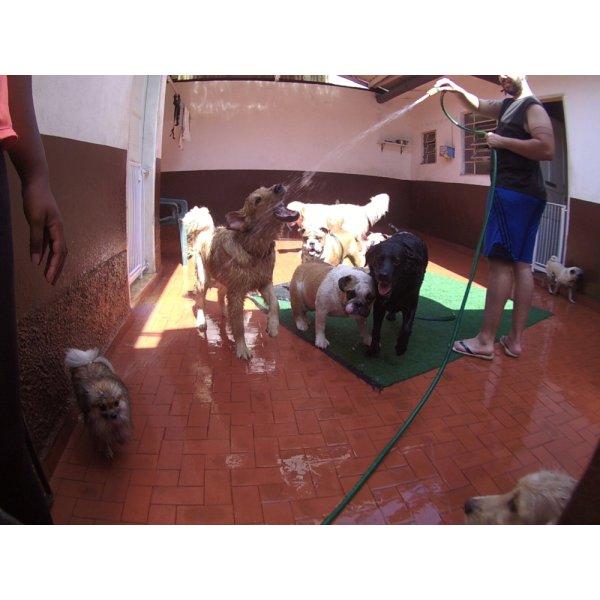 Serviço de Daycare Canino Preços no Parque Marajoara I e II - Day Care para Cães